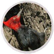 Magellanic Woodpecker - Patagonia Round Beach Towel