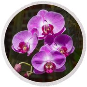 Magenta Orchids Round Beach Towel