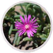 Magenta Purple Desert Moss Rose Round Beach Towel