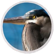 Magnificent Blue Heron Round Beach Towel