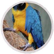 Magnificent Macaw Round Beach Towel