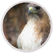 Magnificent Red-tailed Hawk  Round Beach Towel