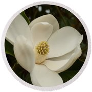 Southern Magnolia Bloom Round Beach Towel