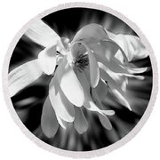 Magnolia Flower In Black And White Round Beach Towel
