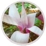 Magnolia Flowering Tree Art Prints White Pink Magnolia Flower Baslee Troutman Round Beach Towel