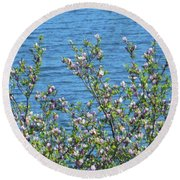 Magnolia Flowering Tree Blue Water Round Beach Towel