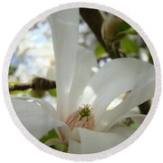 Magnolia Flowers White Magnolia Tree Flower Art Spring Baslee Troutman Round Beach Towel