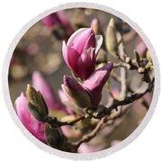 Magnolia In Bloom Round Beach Towel