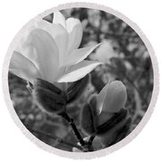 Magnolias In Spring Round Beach Towel