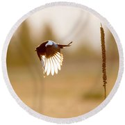 Magpie Wings Of Light Round Beach Towel