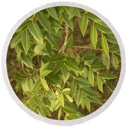 Mahogany Leaves On A Branch Round Beach Towel