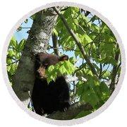 Maine Black Bear Cub In Tree Round Beach Towel