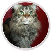Maine Coon Portrait Round Beach Towel