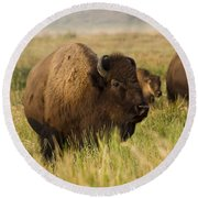 Majestic Bison Round Beach Towel