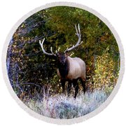 Majestic Bull Elk Survivor In Colorado  Round Beach Towel