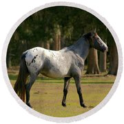 Majestic Horse Round Beach Towel