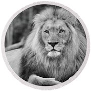 Majestic Male Lion Black And White Photo Round Beach Towel