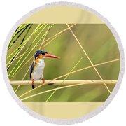 Malachite Kingfisher On Watch Round Beach Towel