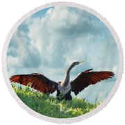 Male American Anhinga  Round Beach Towel