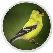 Male American Golden Finch On Twig Round Beach Towel