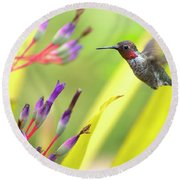 Male Anna's Hummingbird Round Beach Towel
