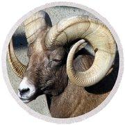 Male Bighorn Sheep Ram Round Beach Towel