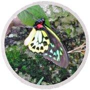 Male Birdwing Butterfly Round Beach Towel