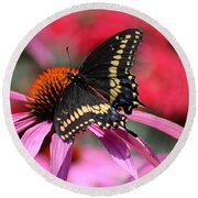Male Black Swallowtail Butterfly On Echinacea Plant Round Beach Towel