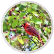 Male Cardinal And His Berry Round Beach Towel by Kerri Farley