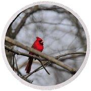 Male Cardinal Round Beach Towel