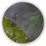Male Common Chaffinch  Round Beach Towel