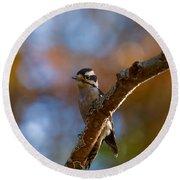 Male Downy Woodpecker Round Beach Towel
