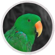 Male Eclectus Round Beach Towel