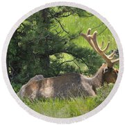 D10271-male Elk 2  Round Beach Towel