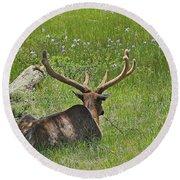 D10270-male Elk  Round Beach Towel