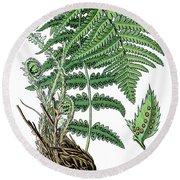 male fern, Dryopteris filix-mas Round Beach Towel