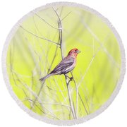 Male Finch On Bare Branch Round Beach Towel