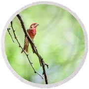 Male House Finch Out On A Limb Round Beach Towel