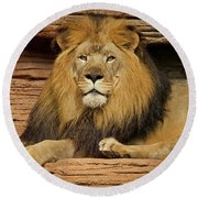 Male Lion Looking Right At Me Round Beach Towel
