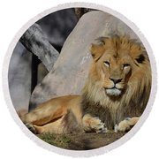 Male Lion Resting In The Warm Sunshine Round Beach Towel