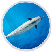 Male Narwhal Round Beach Towel