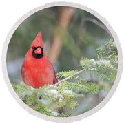Male Northern Cardinal 2 Round Beach Towel