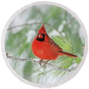 Male Northern Cardinal In Winter - 2 Round Beach Towel