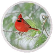 Male Northern Cardinal In Winter Round Beach Towel
