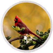 Male Northern Red Cardinal Round Beach Towel