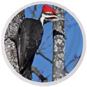 Male Pileated Woodpecker 6340 Round Beach Towel
