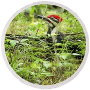 Male Pileated Woodpecker On The Ground No. 2 Round Beach Towel