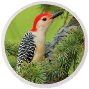 Male Red Bellied Woodpecker In A Tree Round Beach Towel