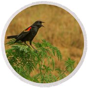 Male Red-winged Blackbird Singing Round Beach Towel
