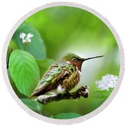 Male Ruby-throated Hummingbird At Rest Round Beach Towel